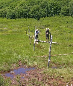 Crossing a bog on logs