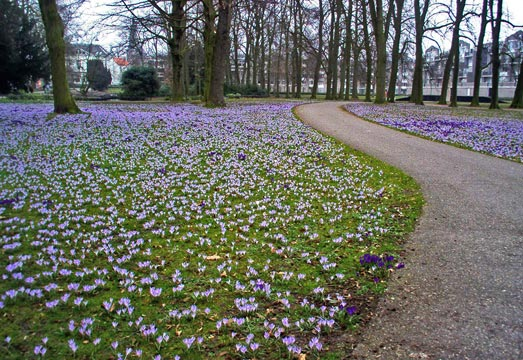 Spring flowers in the park in Oosterhout